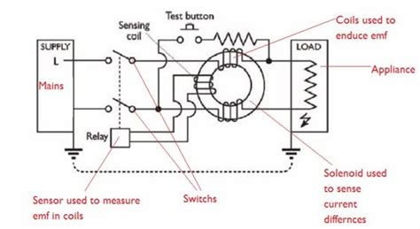 s world labelled diagram of rcd