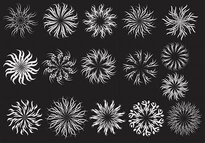 Spiral Vector Ornate Pack Brushes Flower Banner
