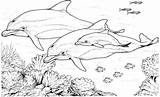 Dolphin Coloring Dolphins Swimming Animals Printable Realistic Sheets Adults Dophin sketch template