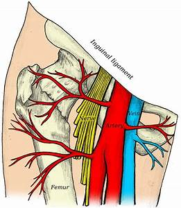 Illustration Of The Femoral Nerve Block Region Showing The