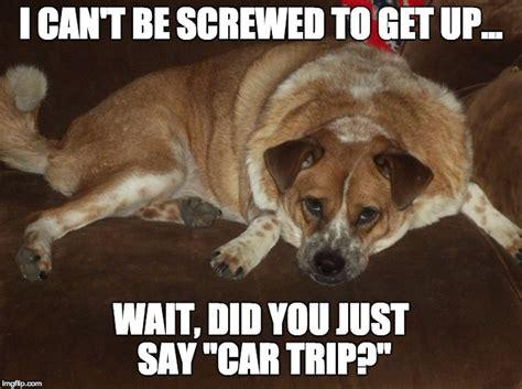 image tagged  grumpy dog imgflip