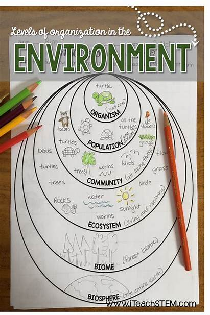 Organization Ecological Stem Science Biology Levels Environment