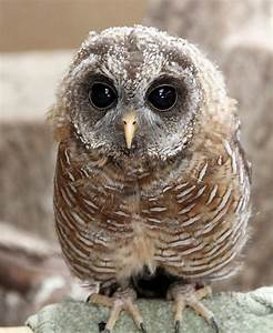 owls small breeds farm park kington herefordshire   Flickr ...