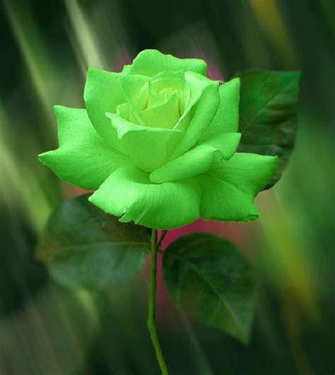 best 25 green ideas on beautiful
