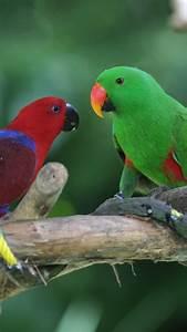 Wallpaper Amazon parrot, Antilles island, bird, green, red, nature, tourism, branch ...  Bird