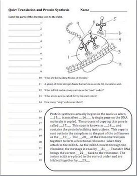 Dna (deoxyribonucleic Acid), Rna, Protein Synthesis Quizzes Set Of 3  Back To, Transcription