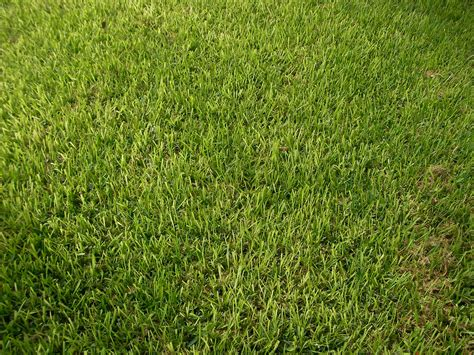 Which Types Of Grass Should I Plant In Austin?