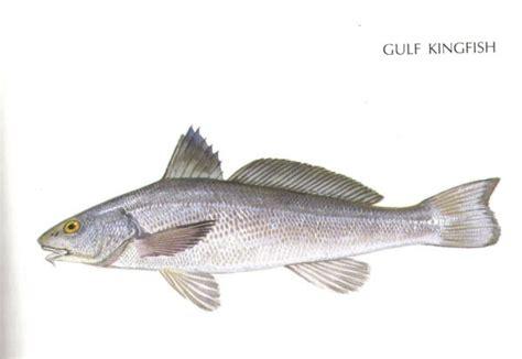 whiting fish whatever you call them whiting are among north carolina s tastiest inshore fish carolina