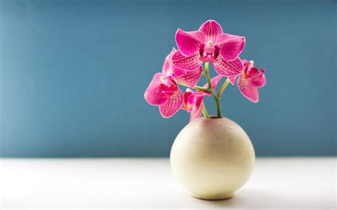 orchid flower picture hd   fun