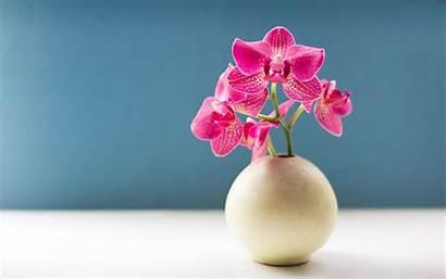 Orchid Desktop Wallpaperlepi Awesome Wallpapersafari Wallpapers