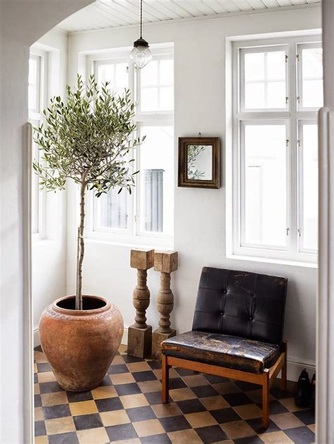 Guide To Growing Olive Trees Indoors   Homesthetics