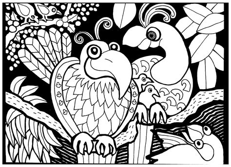 birds and giraffes coloring pages papagei malbuch fur erwachsene 5947