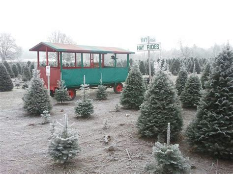 Thorntons Christmas Trees Vancouver Wa get started on holiday decorating in vancouver wa