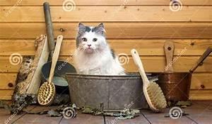 Laver Un Chaton : laver son chat le club fran ais du sacr de birmanie ~ Nature-et-papiers.com Idées de Décoration