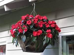 Pflanzen Für Schattigen Balkon : blumen f r balkon im schatten pflanzen ~ Watch28wear.com Haus und Dekorationen
