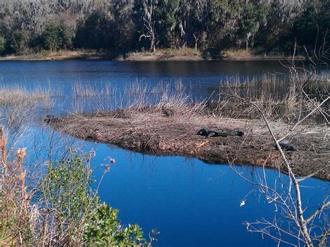 Alachua Sink Gainesville Fl by 17 Best Images About Gainesville Fl Alachua County On