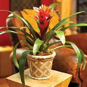 Plantes Vertes D Intérieur Photos : plante interieur rouge et verte map titecampagne ~ Preciouscoupons.com Idées de Décoration