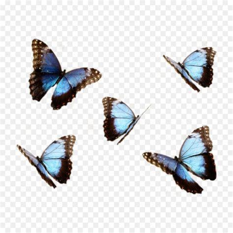 kupu kupu morpho biru menelaus biru morpho gambar png