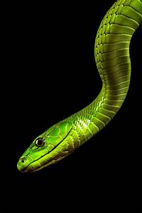 560 best Snakes images on Pinterest | Amphibians, Colorful ...