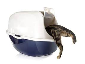 cat pooping outside litter box why is your cat suddenly pooping outside the litter box