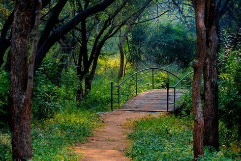 forest wallpaper hd  bagus nature wallpaper
