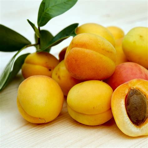 Apricot Kernel Oil - Kamelya Aromacosmétique - Naturals ...