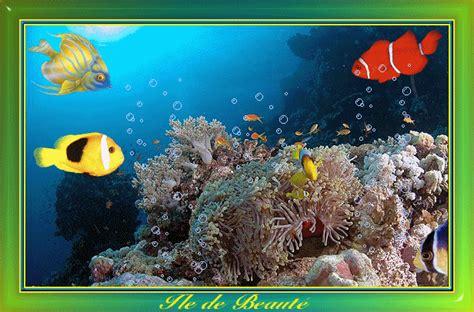 poisson pour petit aquarium 28 images le site du poisson l aquarium pour poisson les 10