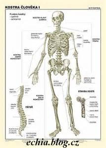 Svaly lidského těla - programy ke stažení zdarma - dwn
