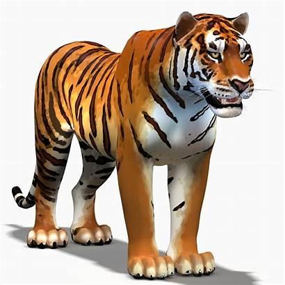 Tiger Bengal Cartoon