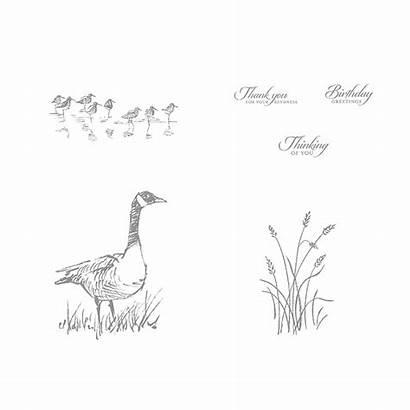 Wetlands Stamp Birthday Greetings Stampwithjini