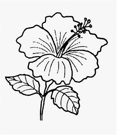 Bunga Gambar Hitam Putih Raya Clipart Pohon