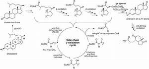 M  Tuberculosis Cholesterol Degradation Pathway  Not All