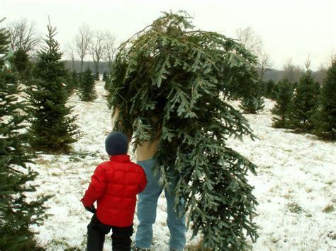 cut down your own christmas tree edmonton where to cut your own tree around burlington vt