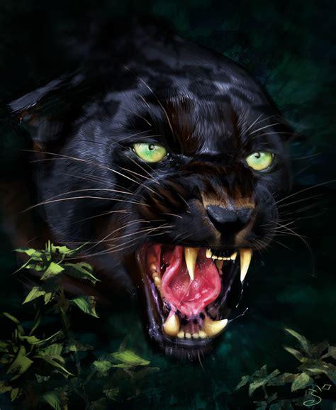 Black Jaguar Animal Hd Wallpapers - jaguar predator black animal muzzle wallpaper