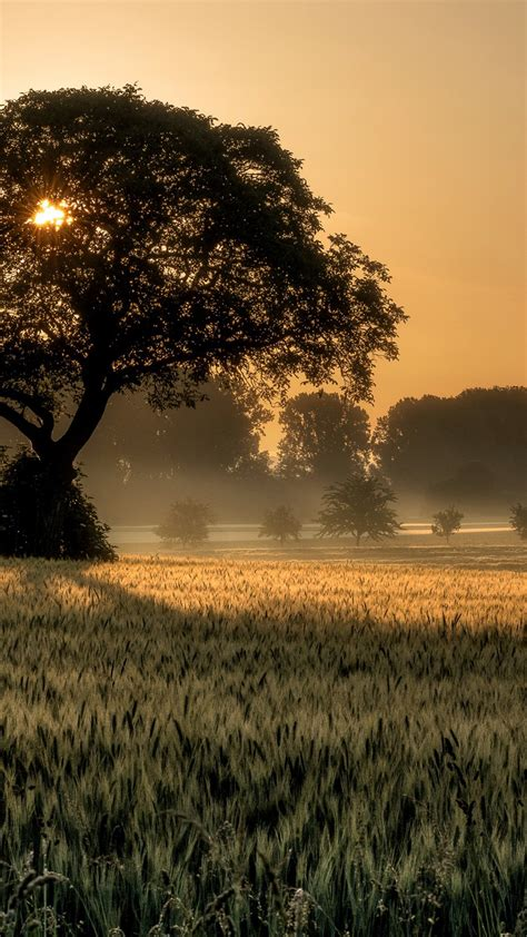 wallpaper sunset tree field  nature