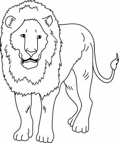 Lion Clipart Clip Drawing Coloring King Line