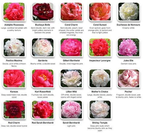 variety names peonies by color via hyperactive farms flower identification pinterest peony farming and