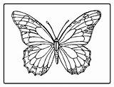 Butterfly Coloring Butterflies Colouring Printable Sheets Sheet Butterflys Printables Buterfly Colors Detailed Adult Flowers Coloringpages Template Flower Templates sketch template