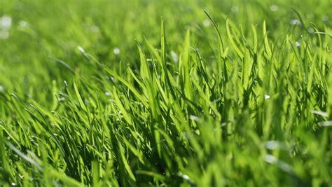 Gräser Für Den Garten Heimliche Lieblinge  Sat1 Ratgeber