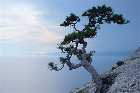 tree   cliff  lvinst redbubble