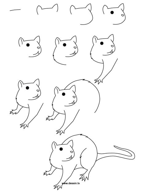 step  step drawing animals learn   draw  rat