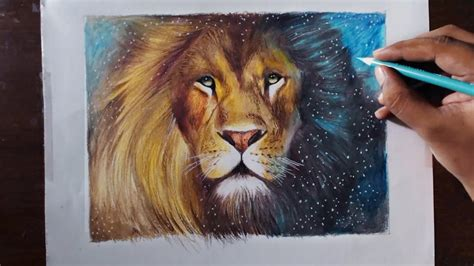 drawing  lion aslan animal series  prismacolor