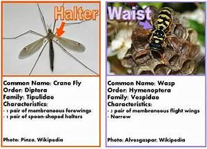 Roots  U0026 39 N U0026 39  Shoots  Flies  Biological Control
