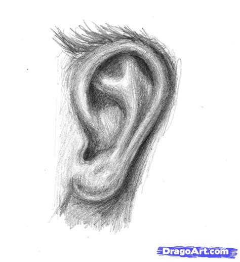 human ear drawing