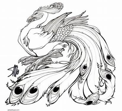Pavo Dibujos Peacock Colorear Coloring Pintar Imprimir