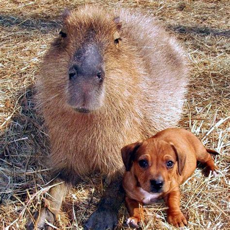 dachshund puppy pictures    handle
