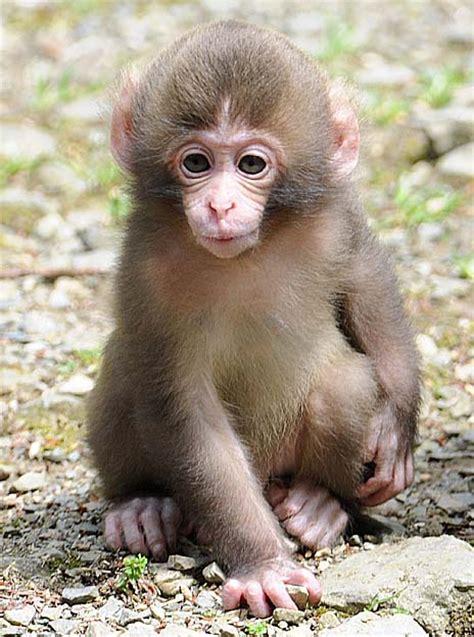 Scimmia Sedere Rosso by 画像 猿の赤ちゃん シャーロット Naver まとめ