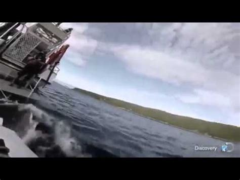 Small Boat Nz by Great White Shark Attacks Small Boat In New Zealand