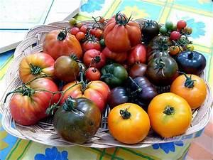 Quand Semer Les Tomates : la recolte des tomates cr dits photo michel caron ~ Melissatoandfro.com Idées de Décoration