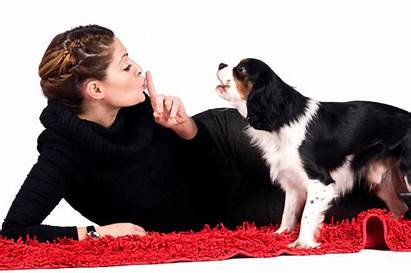 Petsafe Dog Collars Barking Transparent Dogs Annoying